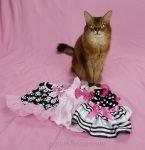 somali cat with dresses