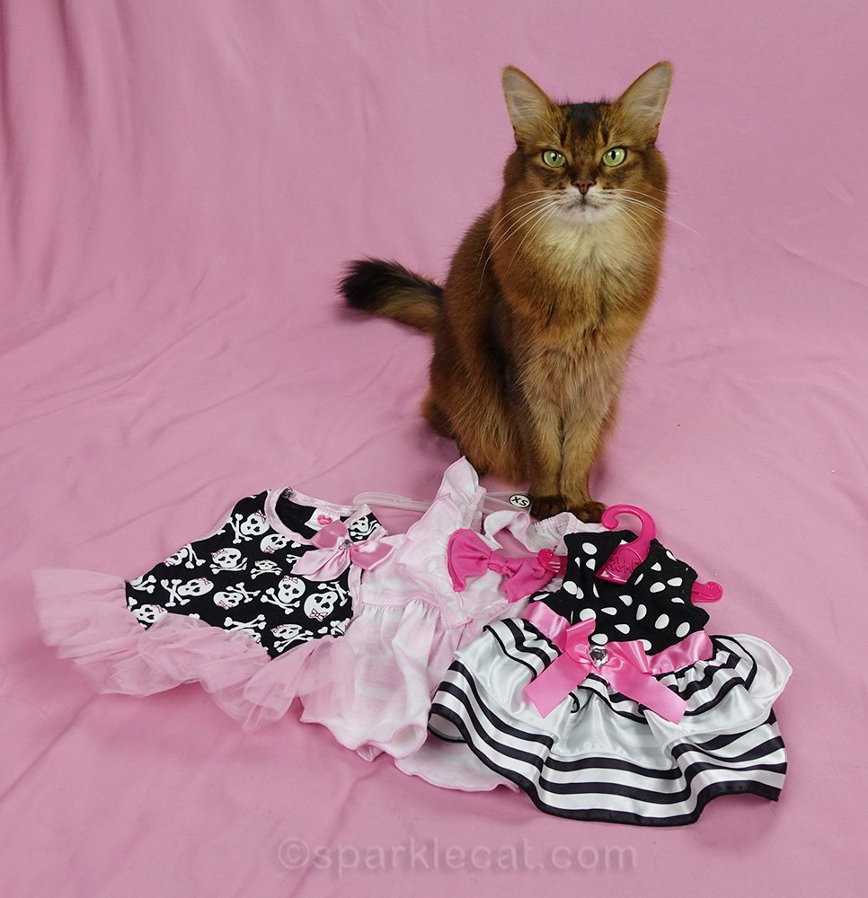 somali cat with dresses