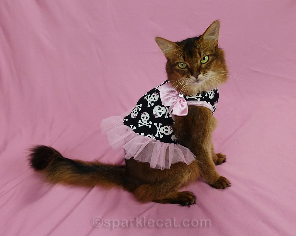 somali cat wearing pink tulle dress with skulls