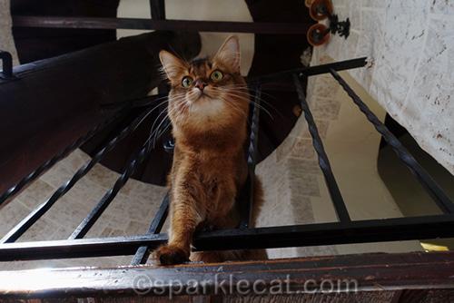 somali cat on top level of turret