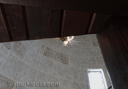 somali cat looking down from upper level of turret