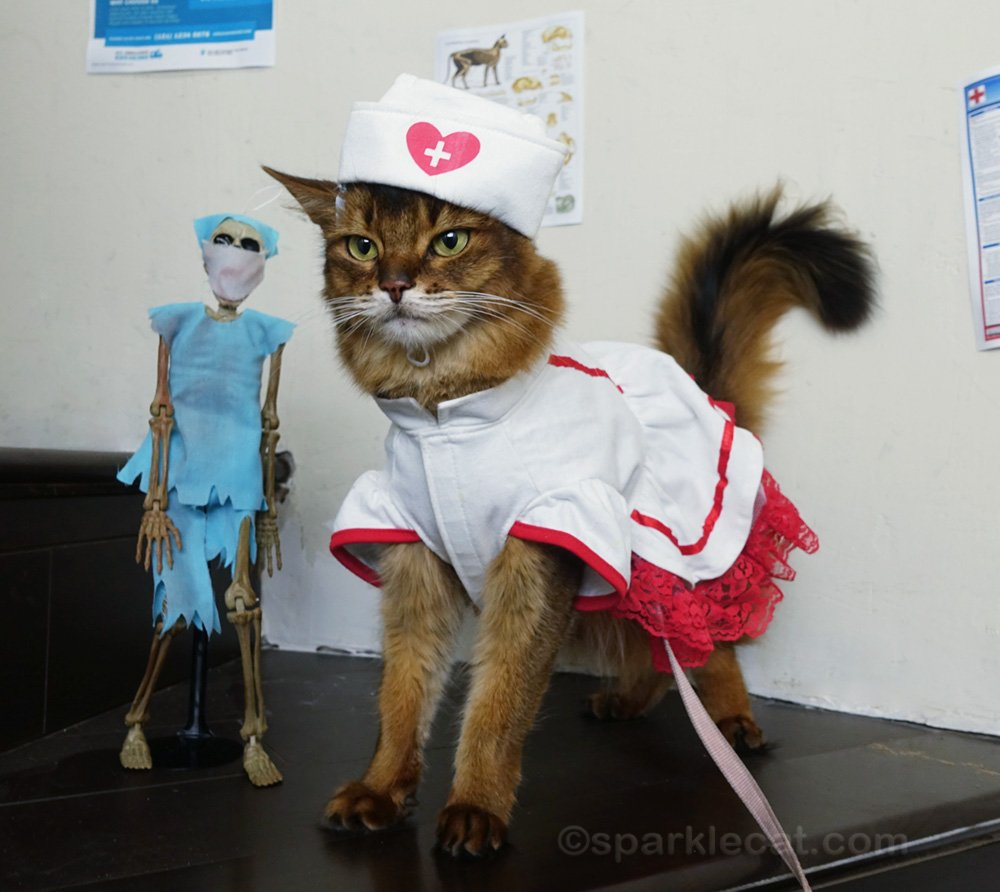 somali cat in nurses outfit, next to skeleton doctor, both looking awkward