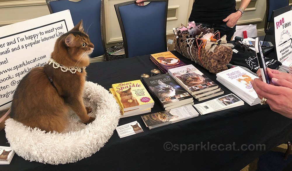 somali cat posing for photos at book signing