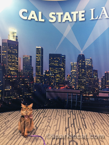 therapy cat poses in front of Cal State L.A. backdrop