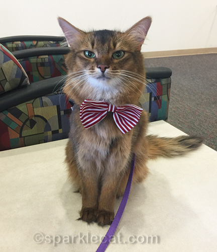 therapy cat sitting in hospital waiting room