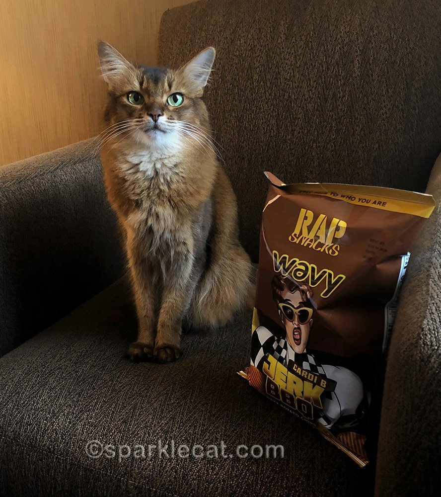 somali cat sitting next to a bag of Rap Snacks