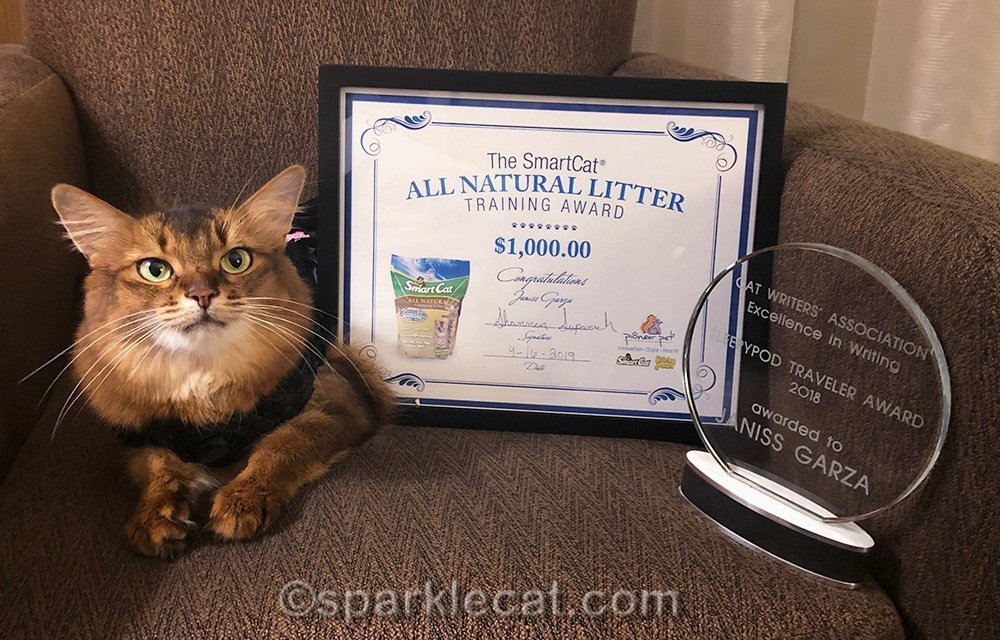 somali cat with two CWA special awards