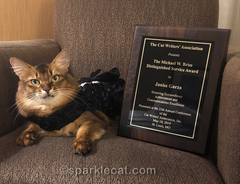 somali cat with CWA Michael Brim award