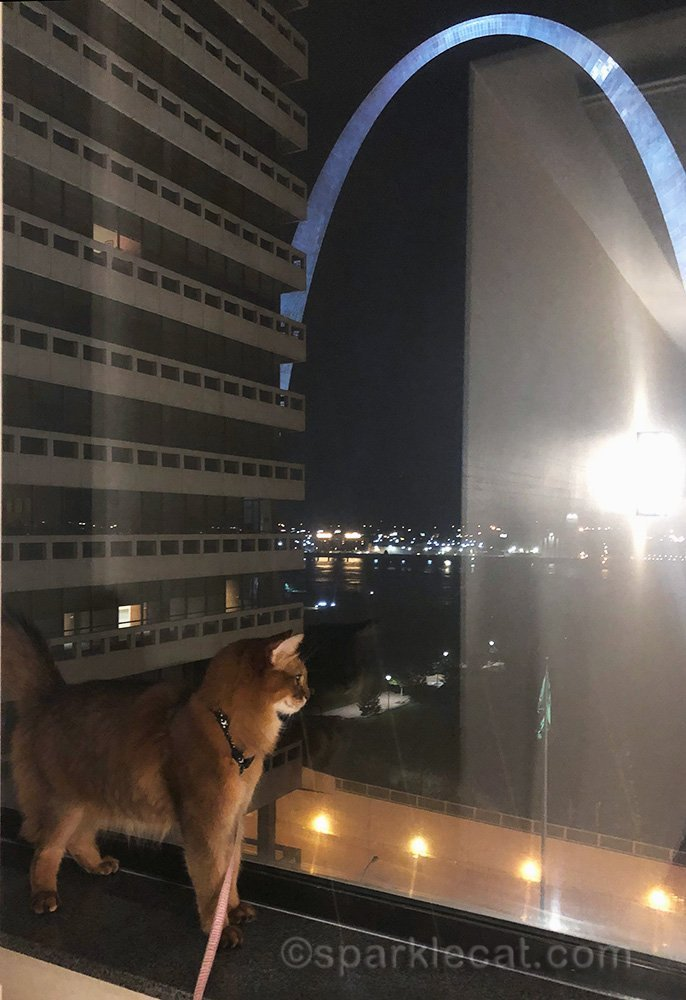 nighttime, and somali cat looking at arch