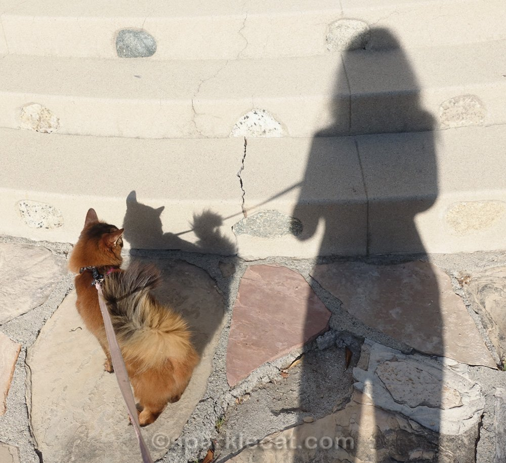 somali cat and shadow of photographer