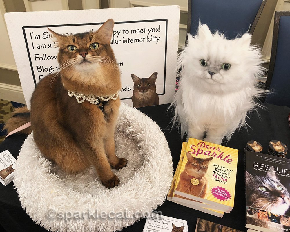 somali cat not sure about Cuddle Clone
