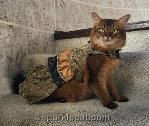 somali cat wearing couture dress