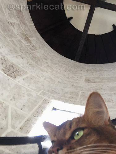 somali cat drops phone while trying to take a selfie