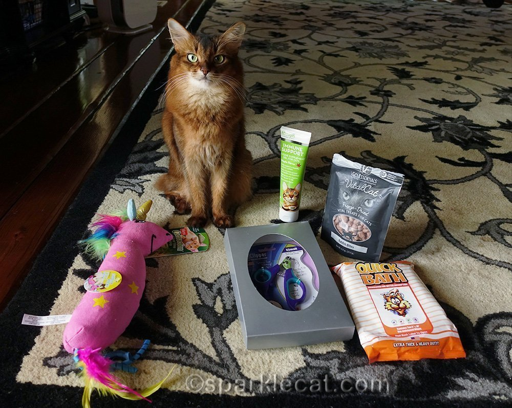 somali cat showing off CWA goodies she gets to keep