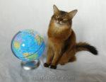 Globe Practice