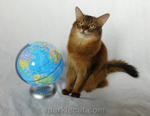 somali cat posing with globe in crappy lighting