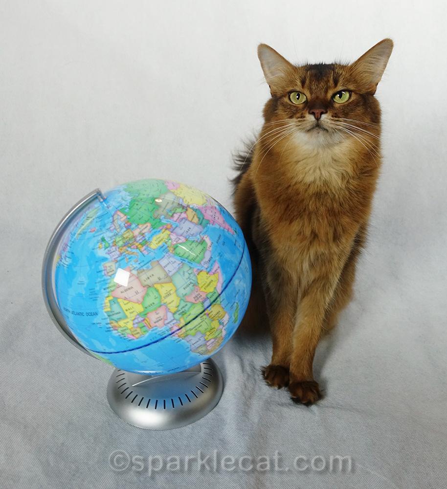 somali cat posing for cat world domination day