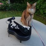 Summer takes her piano practice outside.