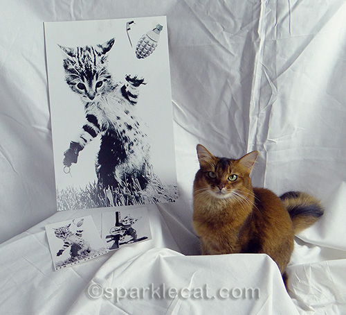 somali cat posing with Arm The Animals poster and stickers