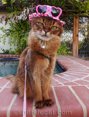 somali cat wearing hat with kitty sunglasses