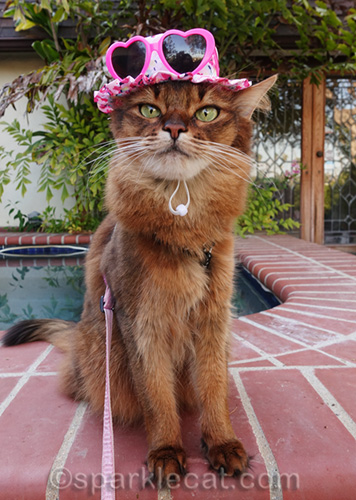 somali cat wearing sun hat with one ear sticking out