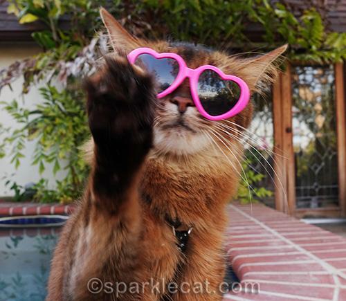 somali cat waving away the paparazzi