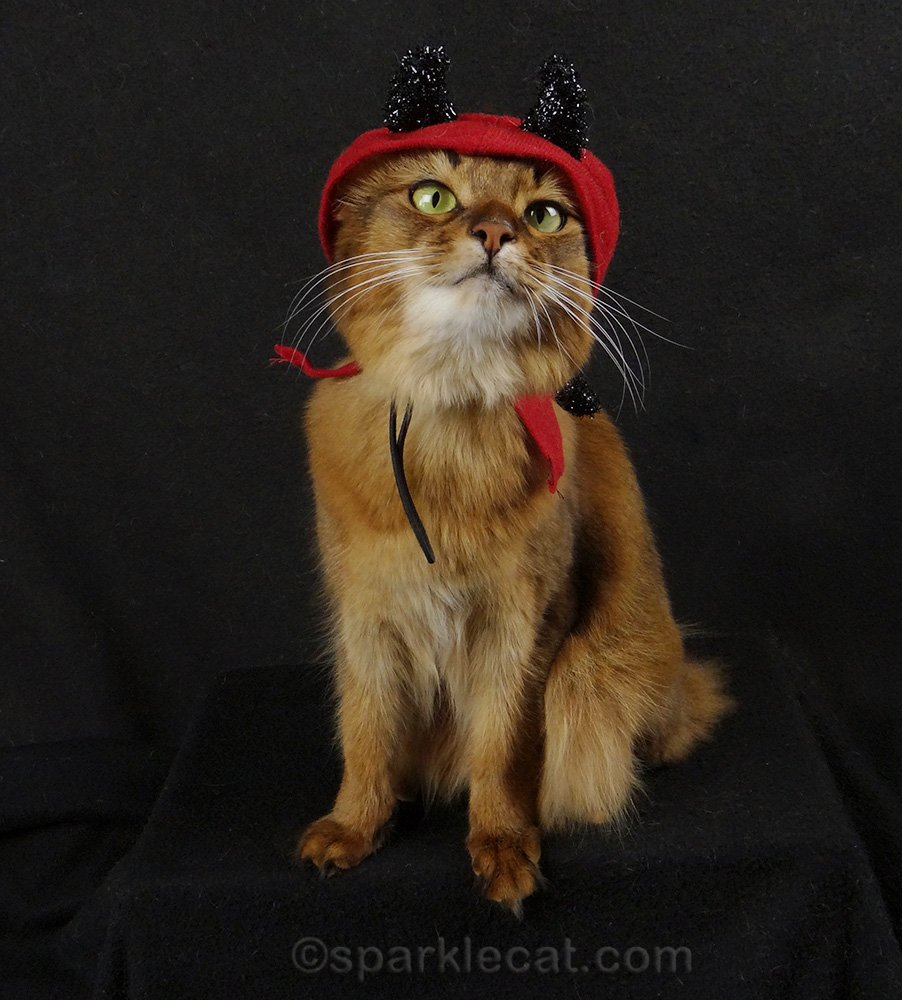 somali cat wearing a little devil costume in May 2015