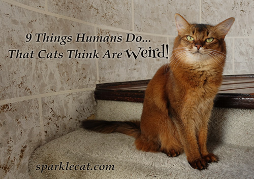 9 Things Humans Do That Cats Think Are Weird