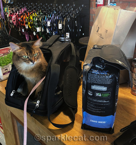 somali cat in carrier at checkout counter