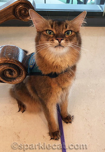 a therapy cat knows who the patients are
