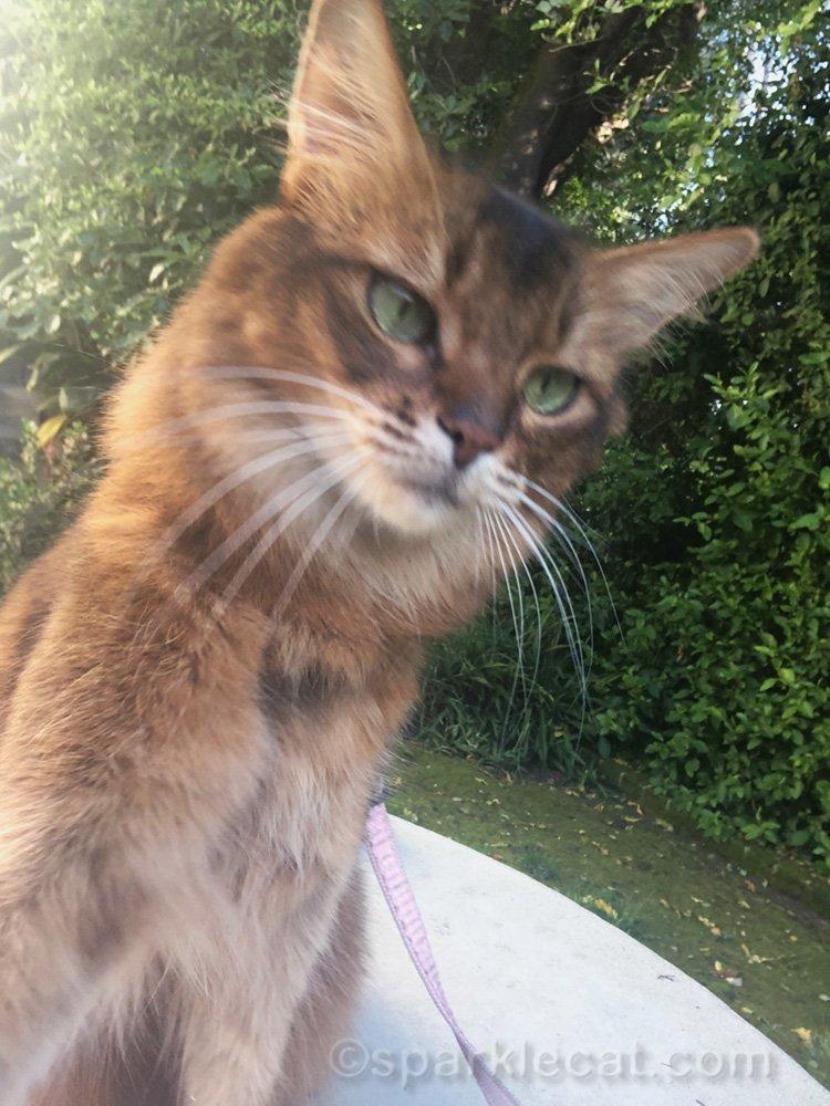 somali cat selfie misfire