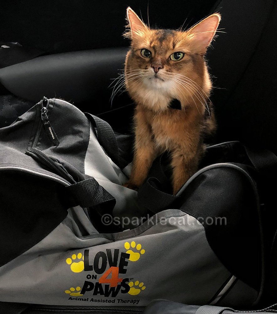 therapy cat after embarrassing visit to a nursing home