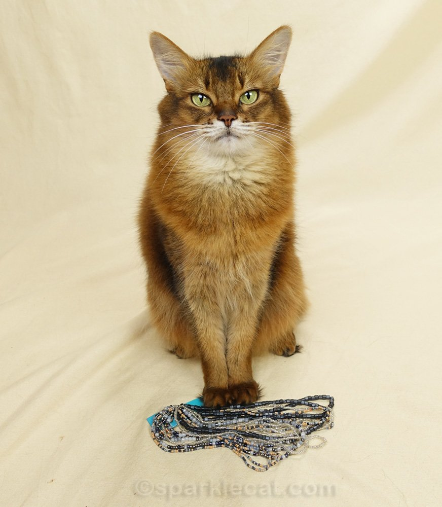Summer's human brings home some craft beads from the store, and tries to use them as cat jewelry for a modeling session.