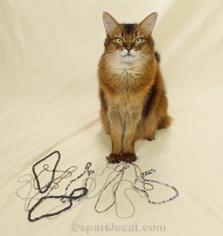 somali cat with many strands of craft beads