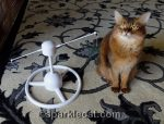 Somali cat with PetSafe Flitter cat toy