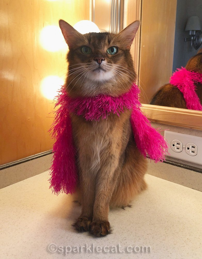 somali cat wears her pink boa in a movie