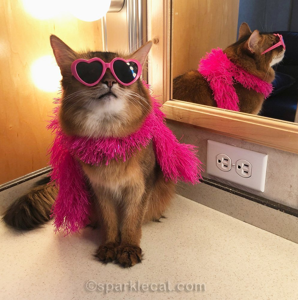 somali cat in pink boa and sunglasses