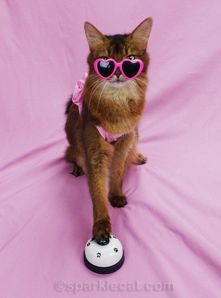 somali cat in bikini and sun glasses, ringing for service