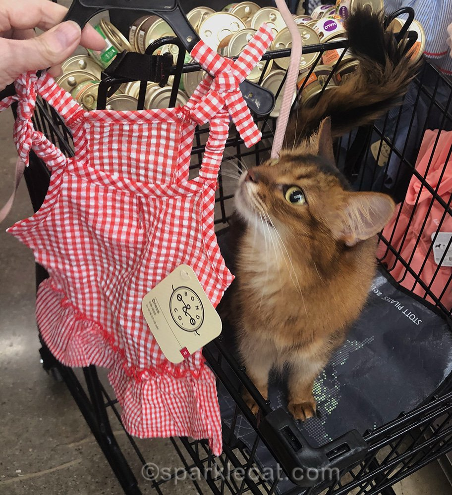 somali cat with new gingham dress