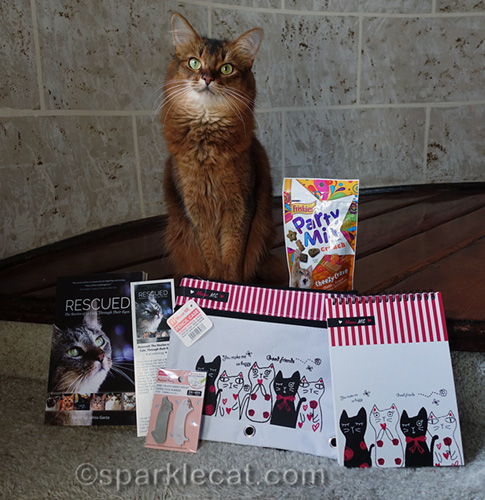 somali cat with prizes from Spring Giveaway