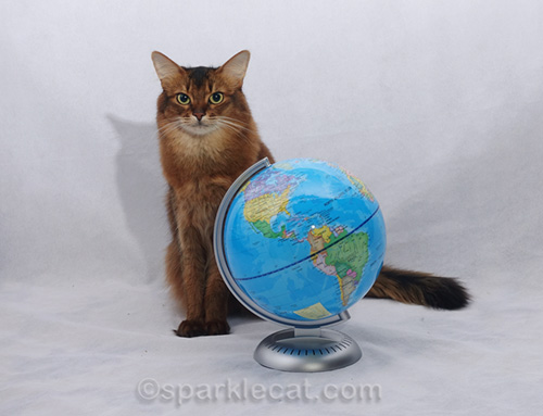 somali cat with globe for Cat World Domination Day