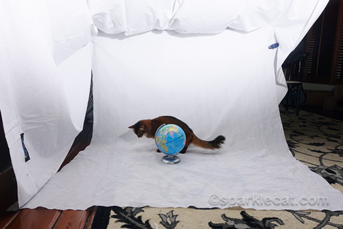 photo session with cat and globe - long shot