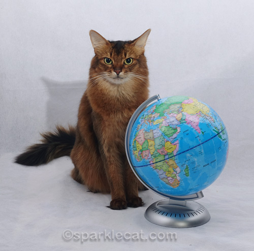 somali cat sitting next to globe
