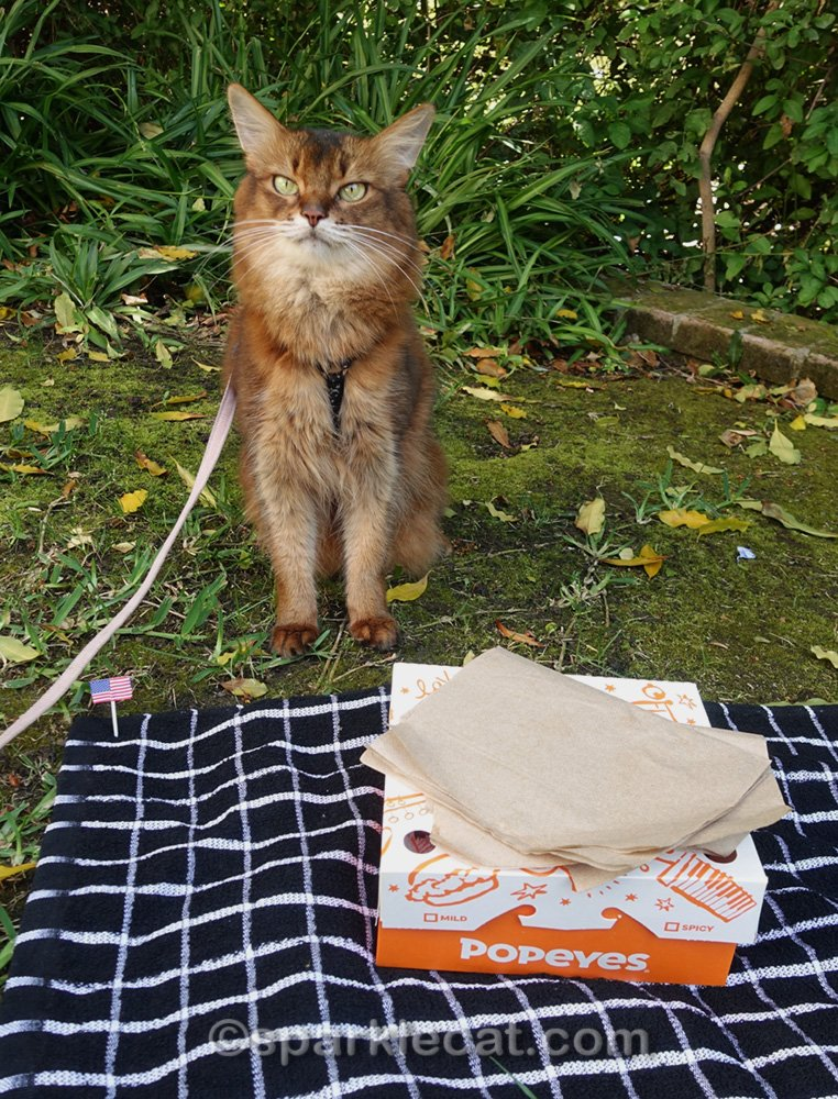 Summer celebrates Memorial Day, cat-style, with a fried chicken picnic and some snacks.