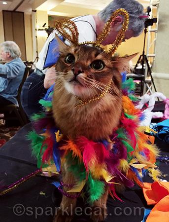 Somali cat, Pawject Runway, BlogPaws, cat costumes