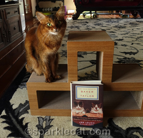 Somali cat posing with Baker and Taylor Library Cat book