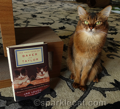somali cat sitting next to Baker and Taylor Library cat book