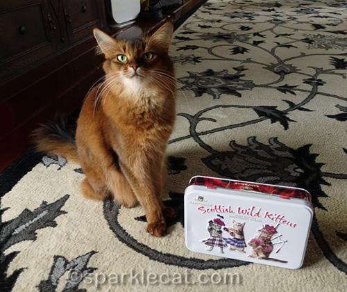 somali cat with Campbells Scottish Wild Kittens tin