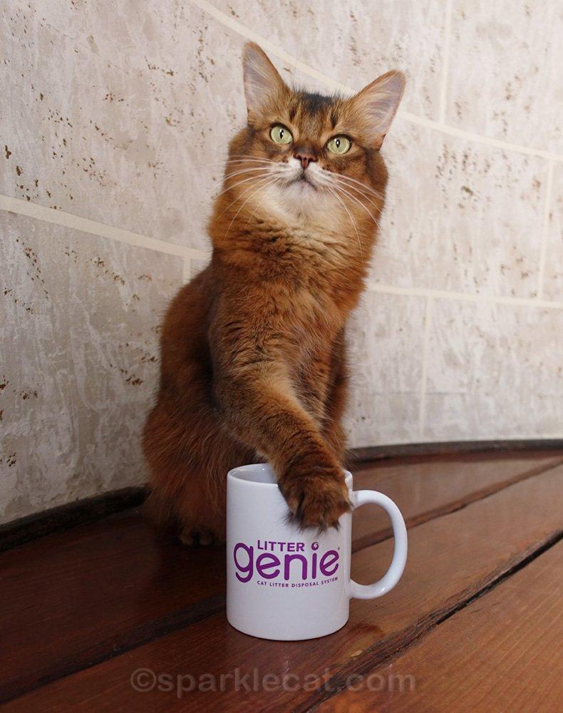 somali cat with paw on a mug