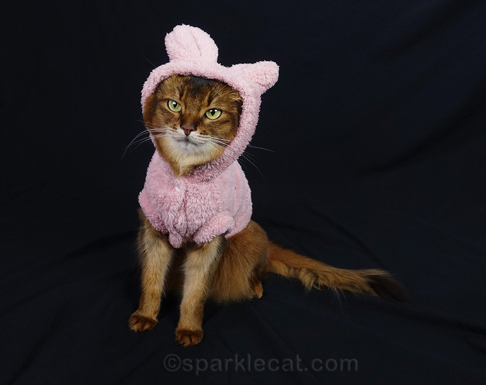 somali cat not happy with outfit